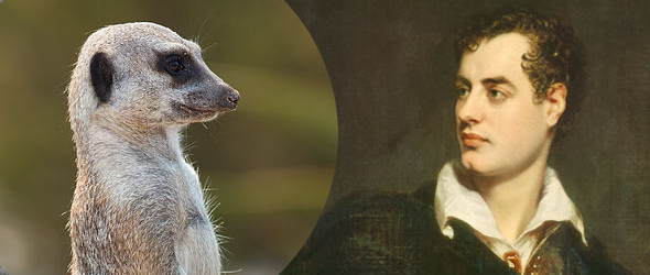 Lord Byron & the Meerkats by Jeremy Thomas